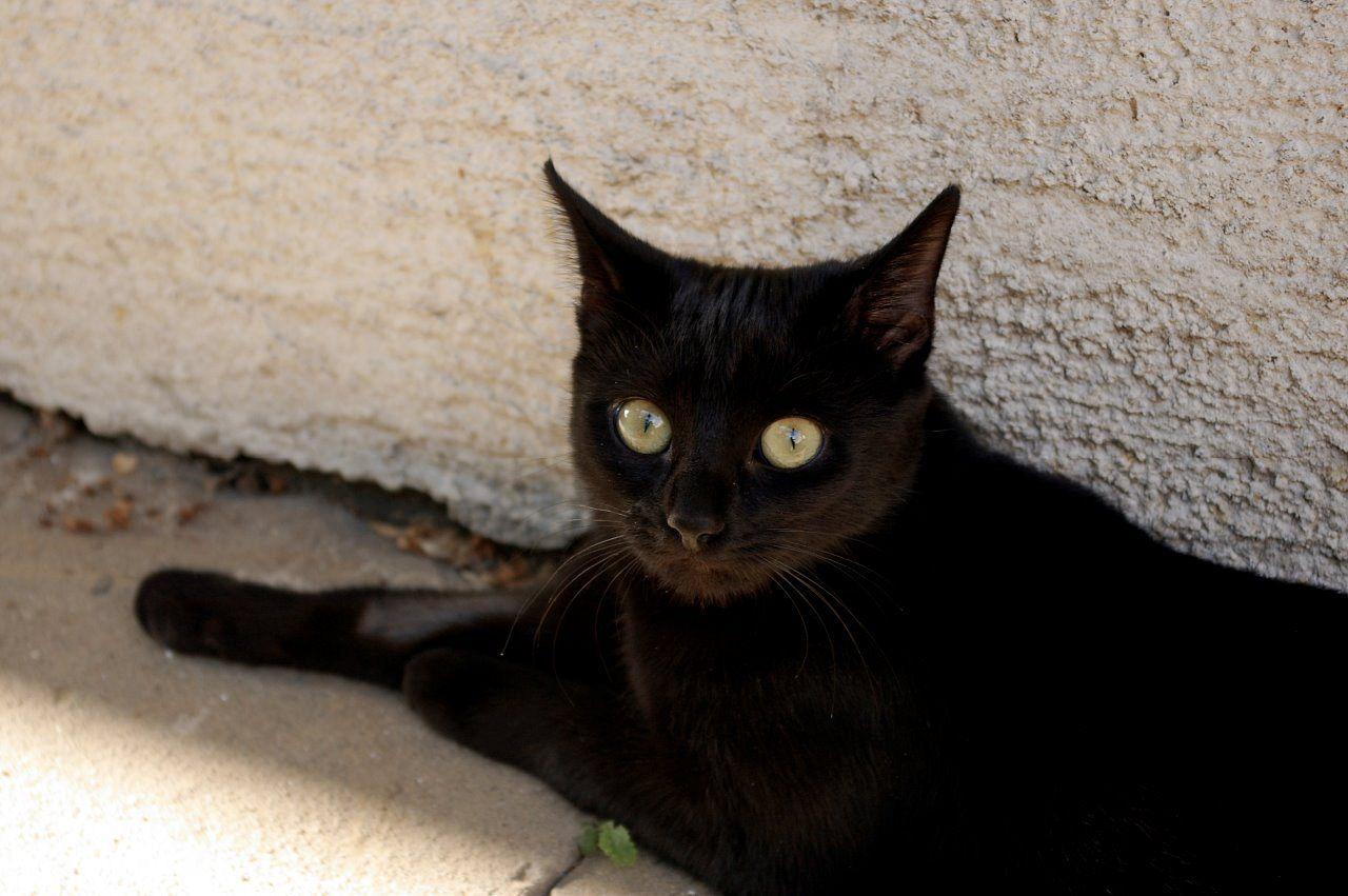 www mladá čierna mačičkalesbain sex